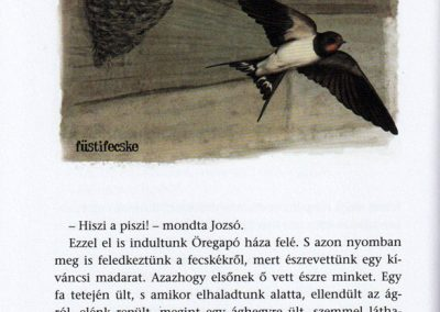 Öregapó-madarai-belso1