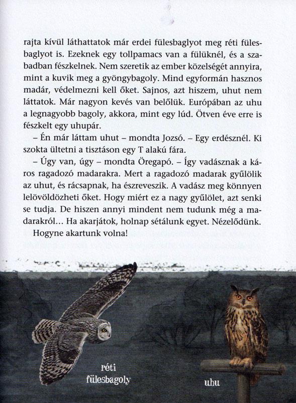 Öregapó-madarai-belso3