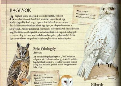 gyerek-allat-enciklopedia-belso5