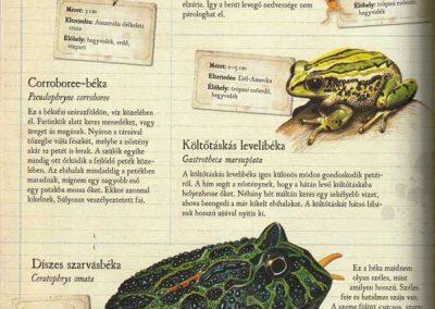 gyerek-allat-enciklopedia-belso8