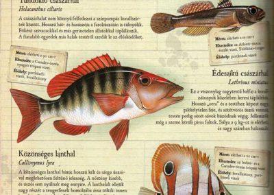 gyerek-allat-enciklopedia-belso9
