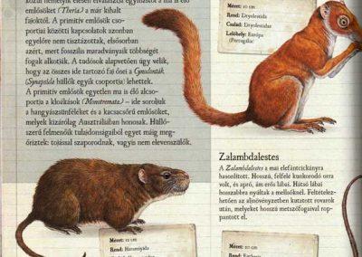 gyerek-dinoszaurusz-es-osallat-enciklopedia-belso6