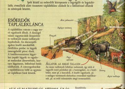 gyerek-vadvilag-enciklopedia-belso3