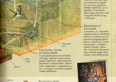 gyerek-vadvilag-enciklopedia-belso4