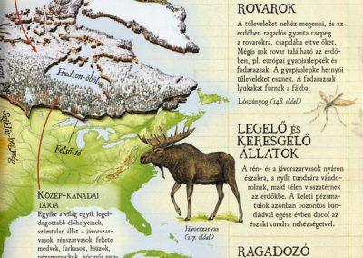 gyerek-vadvilag-enciklopedia-belso6