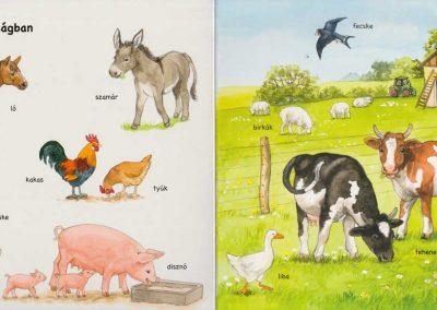 első-képes-állatlexikonom-belso1