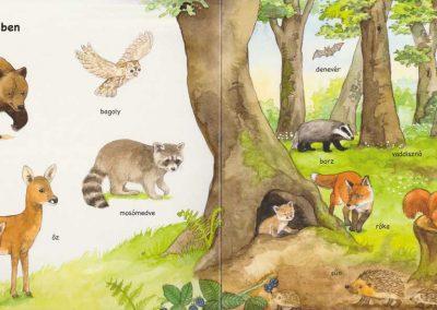 első-képes-állatlexikonom-belso2