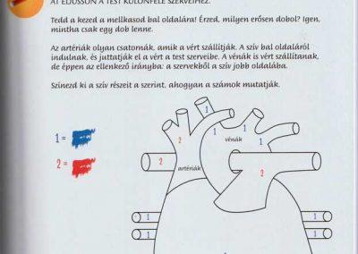 montessori-a-vilag-felfedezese-az-emberi-test-belso1