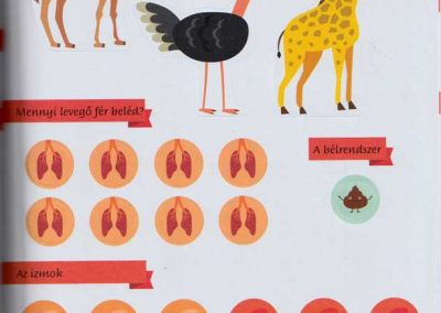 montessori-a-vilag-felfedezese-az-emberi-test-belso3