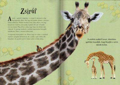 csodálatos-állatok-gyűjteménye-belso2