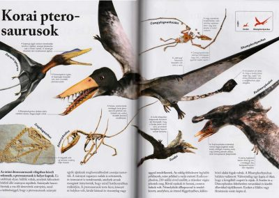 dinoszauruszok-belso5
