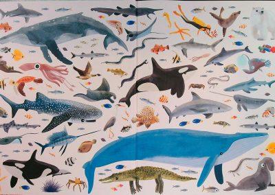 az-óceán-világa-egy-teknős-szemével-belso1